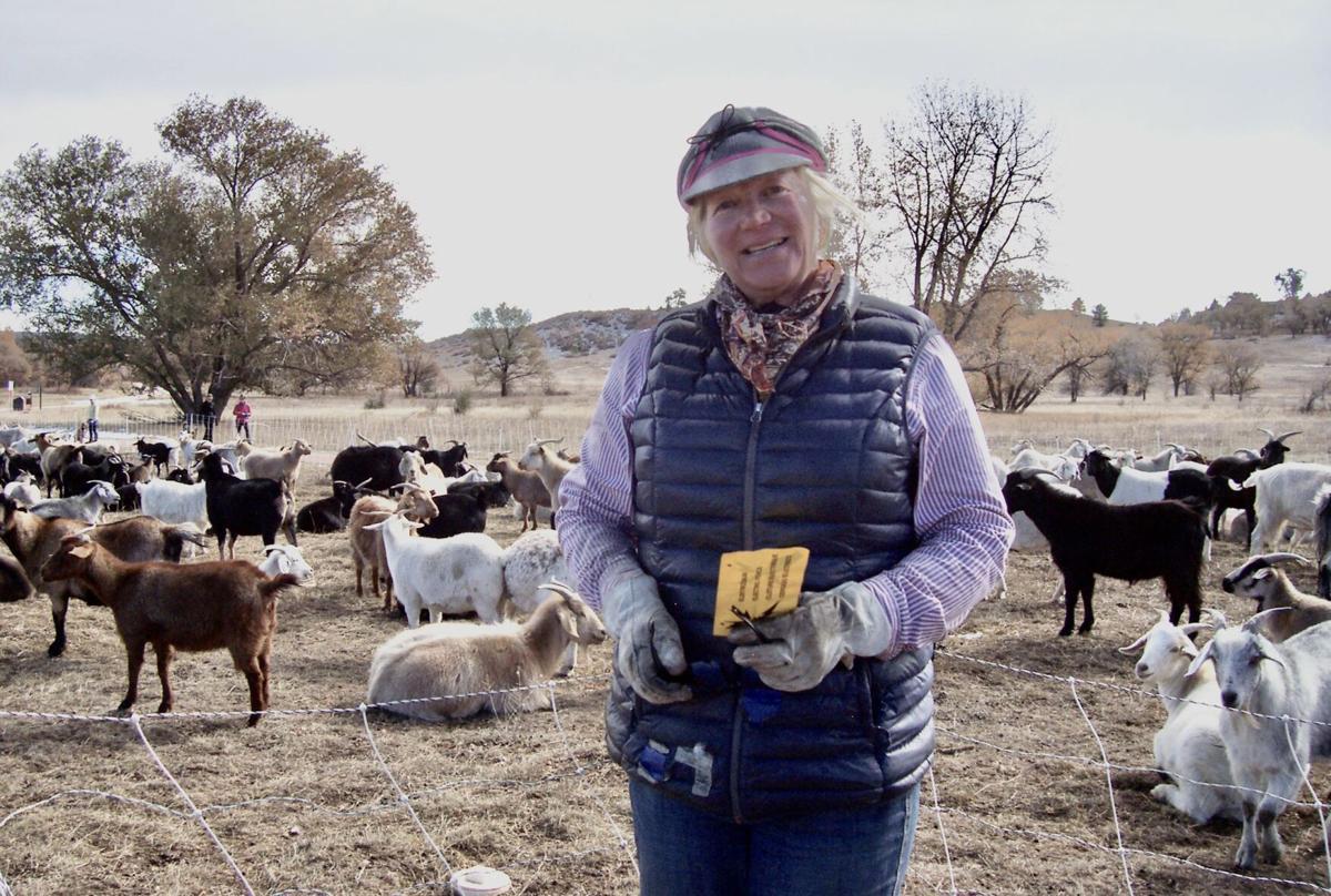 Lani Malmberg weed eating goats
